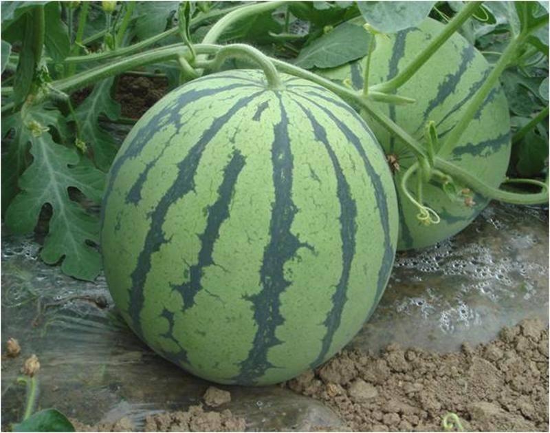 这样吃西瓜可以帮你减肥